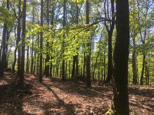 Forest walk (Austria)