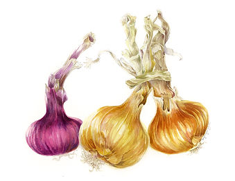 Onions, Red & Yellow copy.jpg