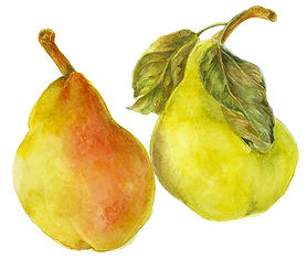 A Fine Pear copy.jpg