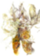 Indian Corn 2.jpg