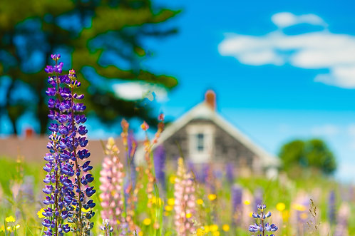 House of Lupins