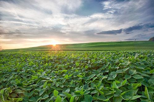 Amish Sunset