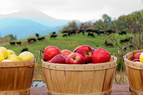 Blue Ridge Apples