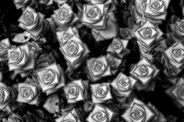 Square flowers 8406 online.jpg
