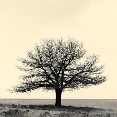 Tree 5002 SQ online.jpg
