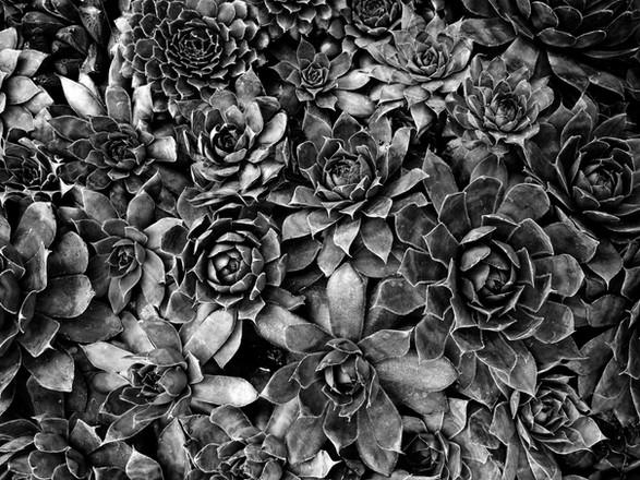 Botanic_2308-Master-Online.jpg