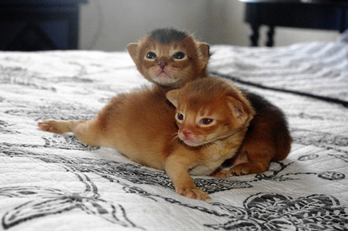 Coco & Tango Kittens.jpg