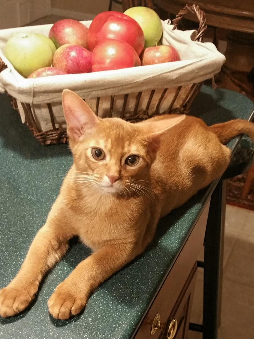 Red kitten.jpg