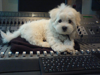 mixing desk puppy dog