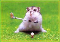 hamster golfer