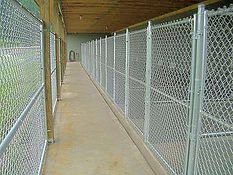 Outside Kennel View_edited.jpg