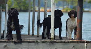 boardwalk dogs.jpg