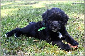 becky as a pup.jpg