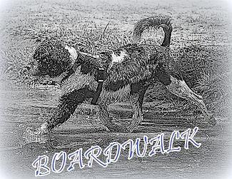 boardwalk logo.jpg