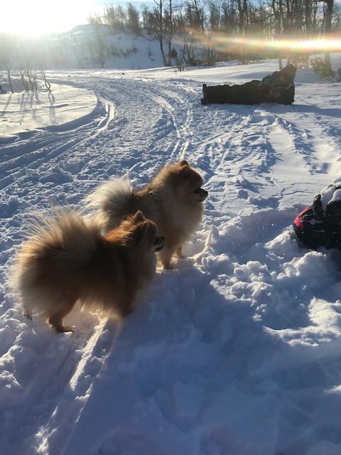 Emile tar bilder av hundene mens de venter på mer snø i lufta å leke med:)