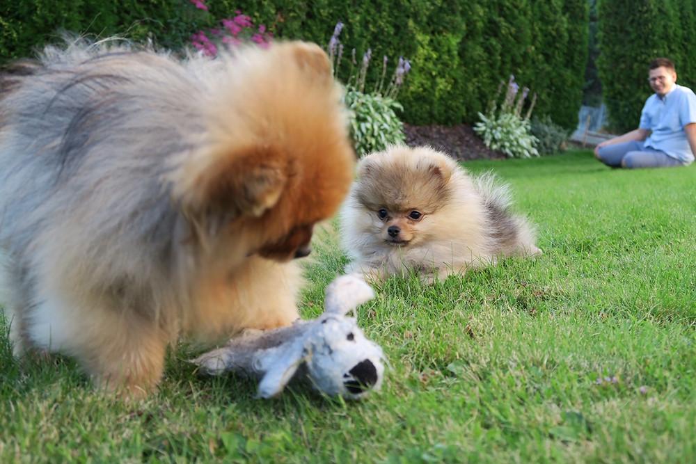 Gucci leker med Shady:)