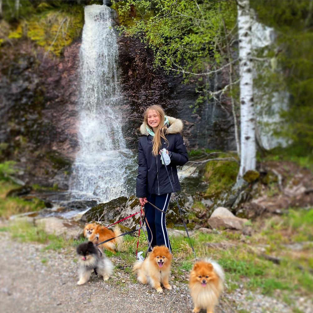 Emilie prøver å få til et bilde med hundene...:)