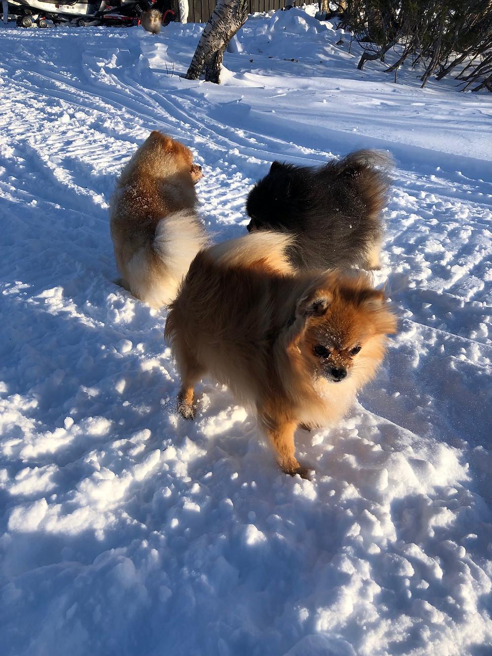 Emile fikk tatt noen flotte bilder av Storm, Zita og Shady i sola.