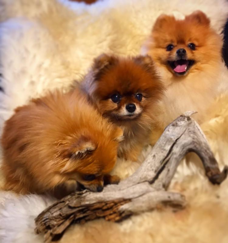 Gucci, Shady og Zita med frisk pels og frisk hud