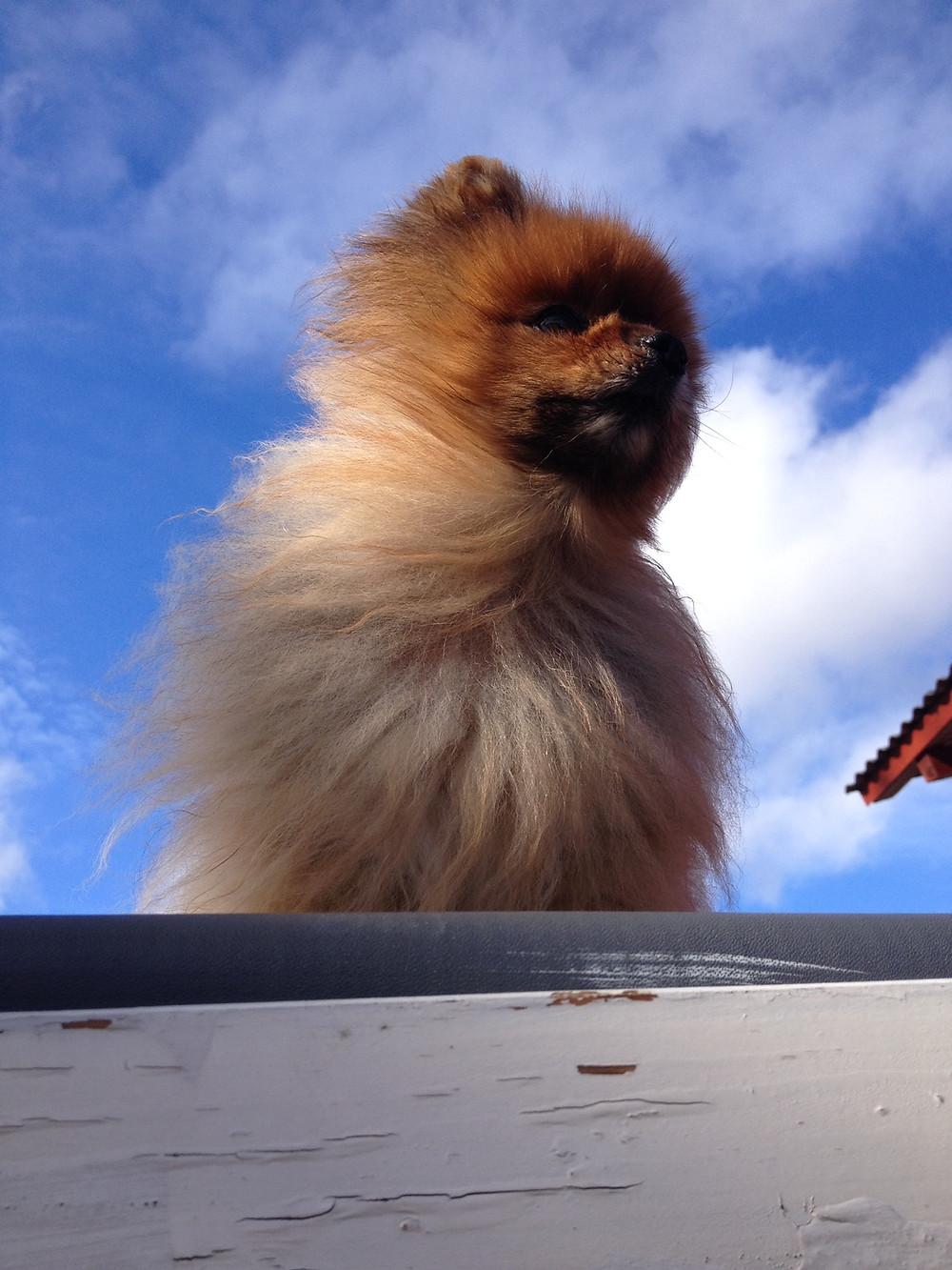 Vind i pelsen:)