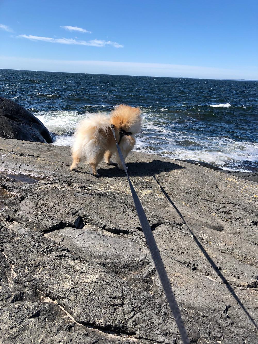 Shady ser på havet å lurer litt på dette:)