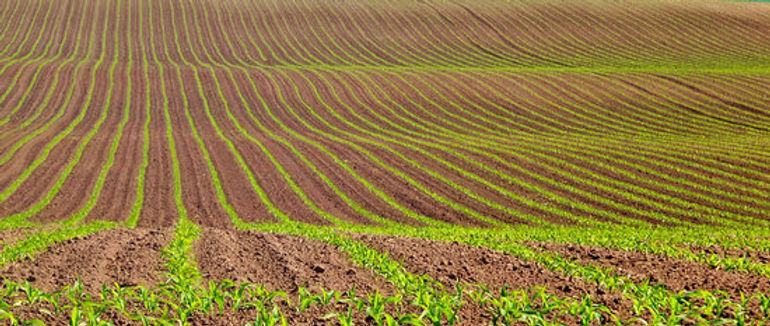 sowing2.jpg