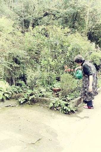 Jardin vert avec grand-mère.jpg