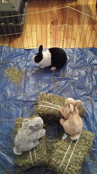 Rabbit-At-Educational-Show.jpg