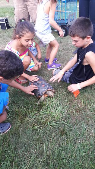 Turtle-Educational-Show-For-Kids.jpg