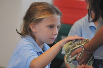 Mammals-For-Children-Educational-Show.jpg