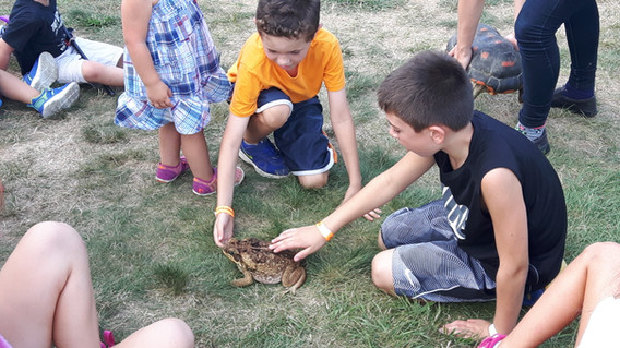 Frog-Animal-Friends-For-Educational-Show.jpg