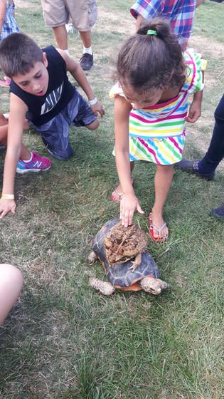 Turtle-For-Kids-Educational-Show.jpg