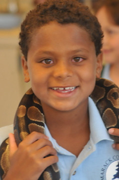 Interactive-Snake-For-Educational-Show.jpg