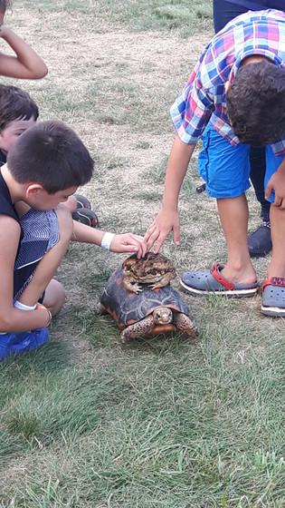 Turtle-Plays-With-Kids.jpg