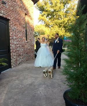 Puppies leading the bride & groom!