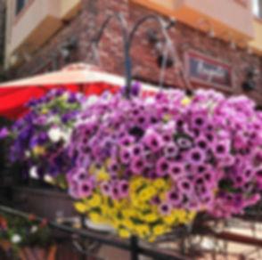 Finest Flowers in Frisco