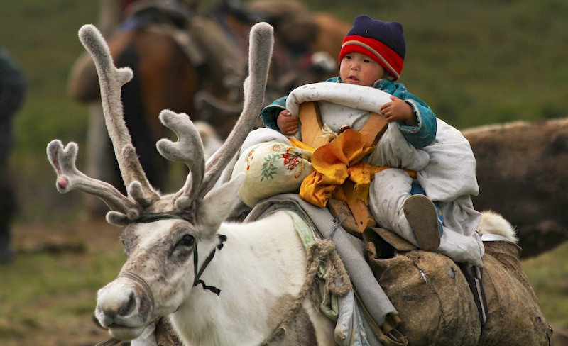 Moving day at the nomadic reindeer village, Mongolia