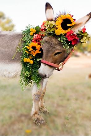 beer burro 3_edited.png