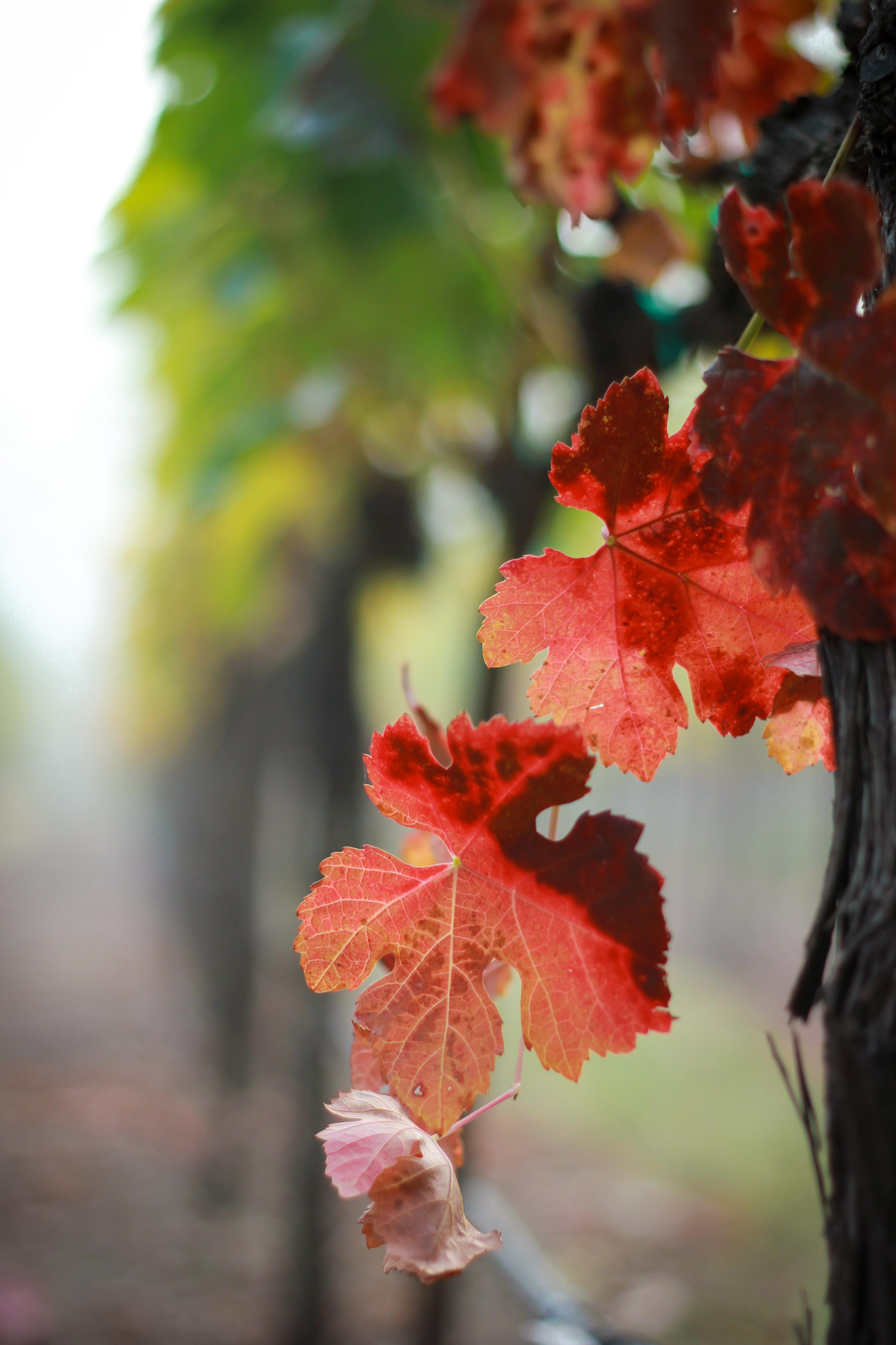 Vines Fall.jpg