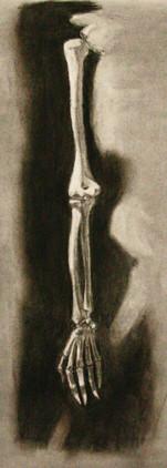 Arm Bones Study