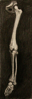 Leg Bones Study
