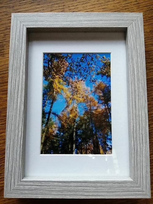 Autumn Larch print - Box frame