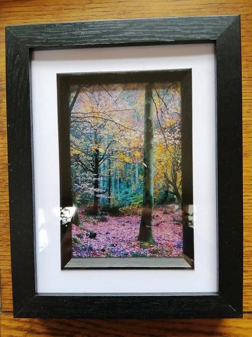 Fairy Beech Grove