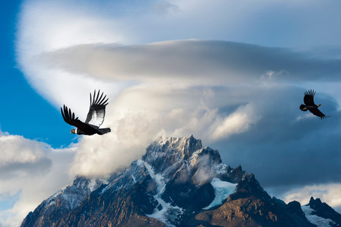 Andean Condors flying over mountains, To