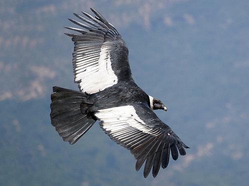 Condor & Autumn Equinox