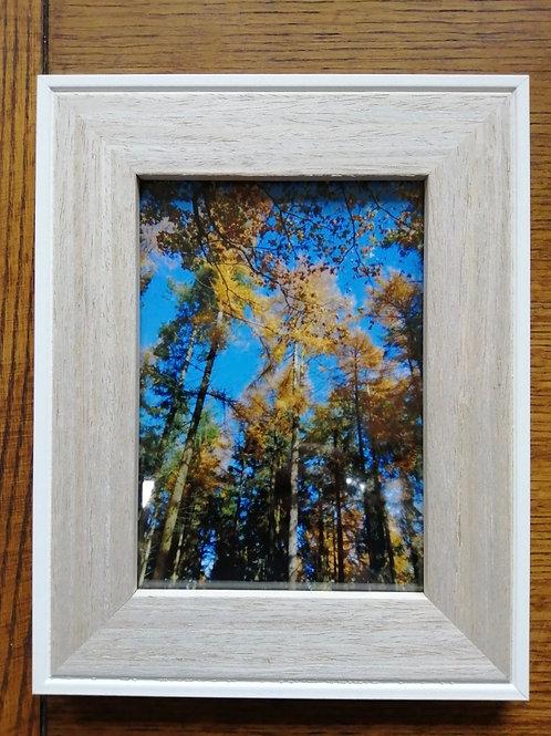 Autumn Larch print