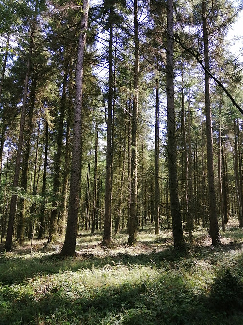 Forest Bathing/Therapy