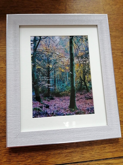 Fairy Beech Grove - large print