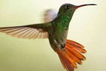 Hummingbird & Beltane