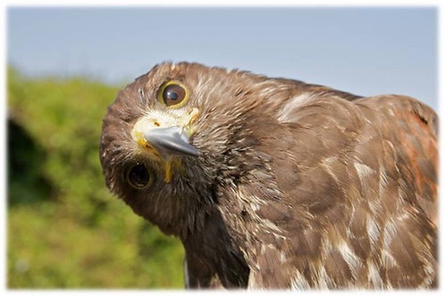 Zoom Session - Intro. Bird Spirit Medicine